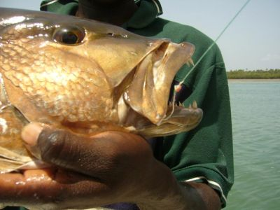 Tips, advise and fishing techniques for sport fishing in Bijagos islands, Guinea Bissau Hooks and fishing line bottom