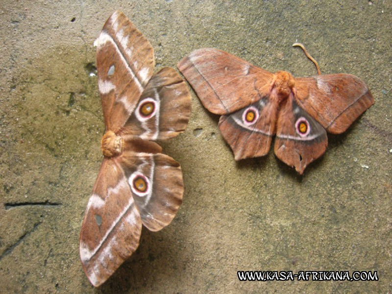 Photos Bijagos Island, Guinea Bissau : Local wildlife - Butterfly