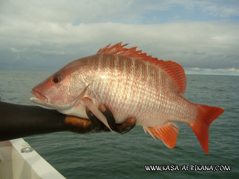 Photos Bijagos Island, Guinea Bissau : Fishes in the archipelago - Rocks carp