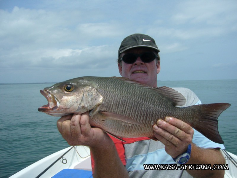 Photos Bijagos Island, Guinea Bissau : Fishes in the archipelago - Reef african red snapper