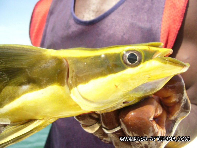 Photos Bijagos Island, Guinea Bissau : Fishes in the archipelago - Remoras