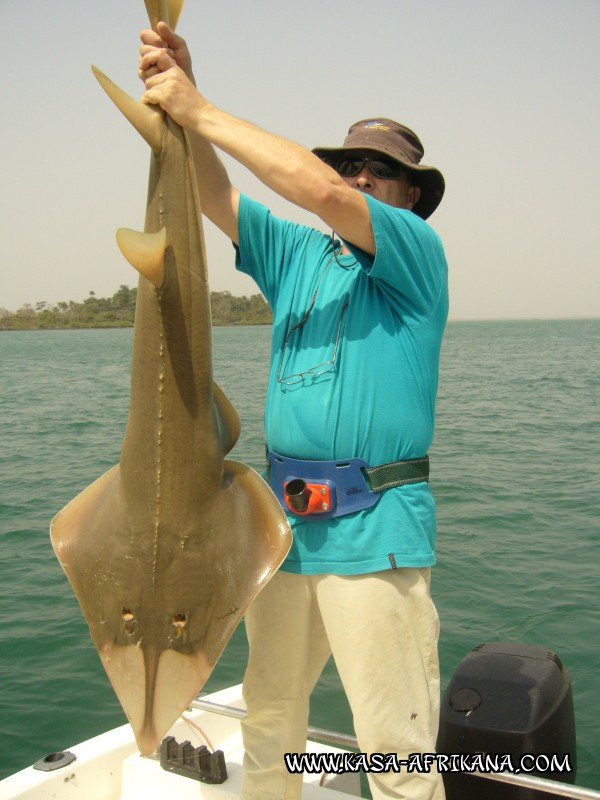 Photos Bijagos Island, Guinea Bissau : Our best catches - Guitarfish