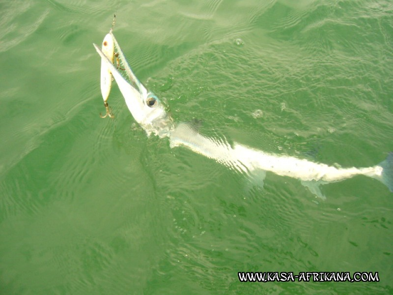 Photos Bijagos Island, Guinea Bissau : Fishes in the archipelago - Tropical needlefish
