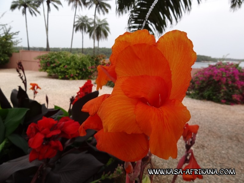 Photos Bijagos Island, Guinea Bissau : The hotel garden -