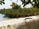 Photos of Bijagos Islands in Guinea Bissau :