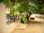 Photos of Bijagos Islands in Guinea Bissau : Mangos
