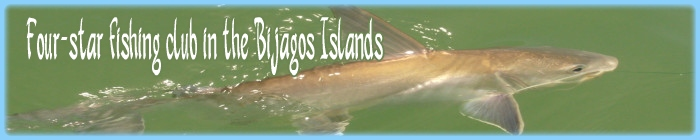 Special relaxation stay in the Bijagos, Guinea Bissau. Hosting in hotel on bubaque island