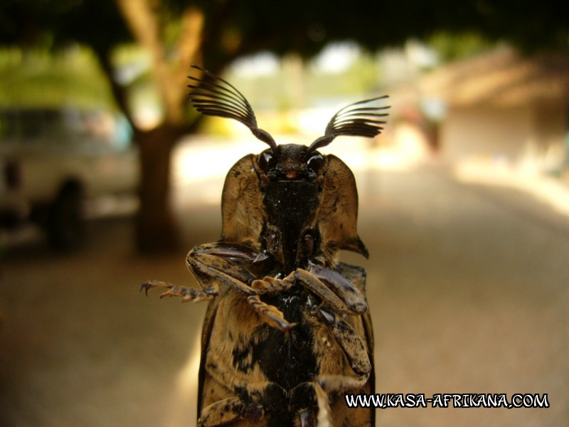 Photos Bijagos Island, Guinea Bissau : Local wildlife - Alien return