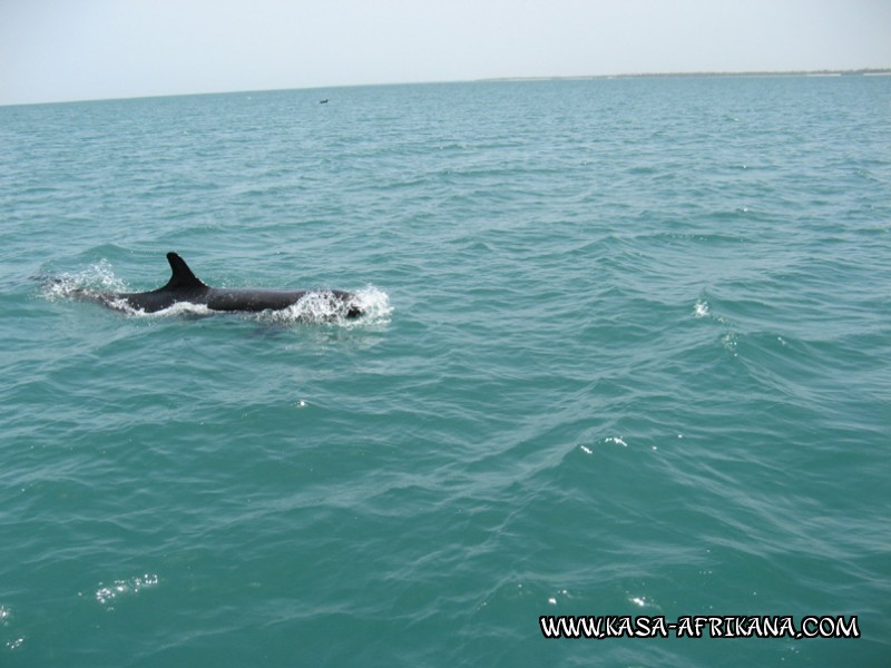 Photos Bijagos Island, Guinea Bissau : Local wildlife - Pilot whale