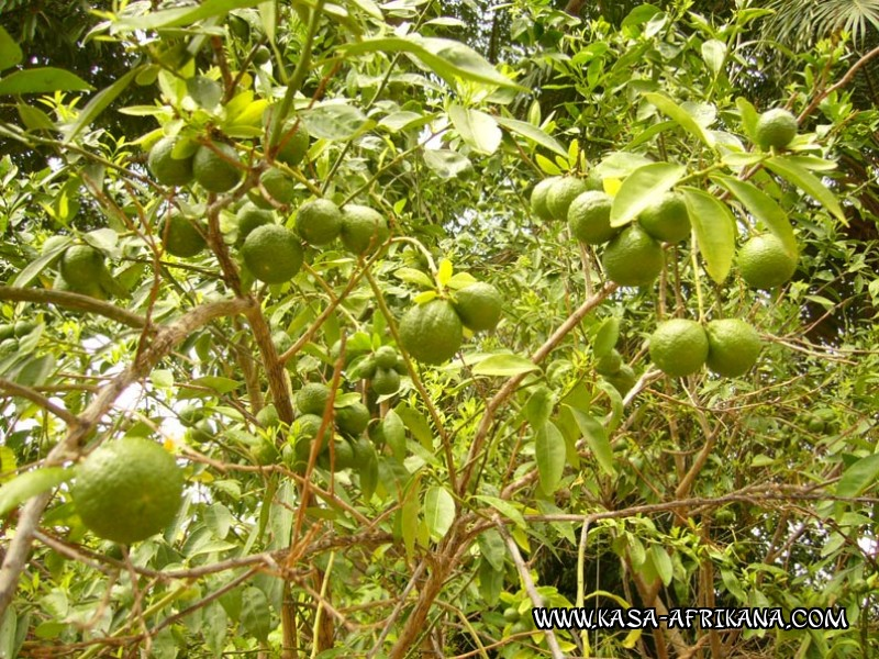 Photos Bijagos Island, Guinea Bissau : The hotel garden - Mandarin oranges from the garden